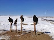 Scary birds...