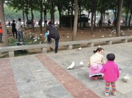 Pigeon feeding - A universally popular pastime